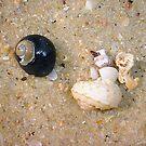 Unusual Seashell by Robert Phillips