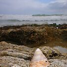 Unusual Seashell Three by Robert Phillips