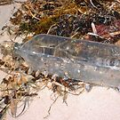 Stray Bottle Washed Up On Beach by Robert Phillips