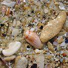 Pheasant Seashell Two by Robert Phillips