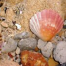Scallop Shell Five by Robert Phillips