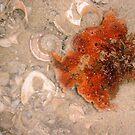Sea Sponge One by Robert Phillips
