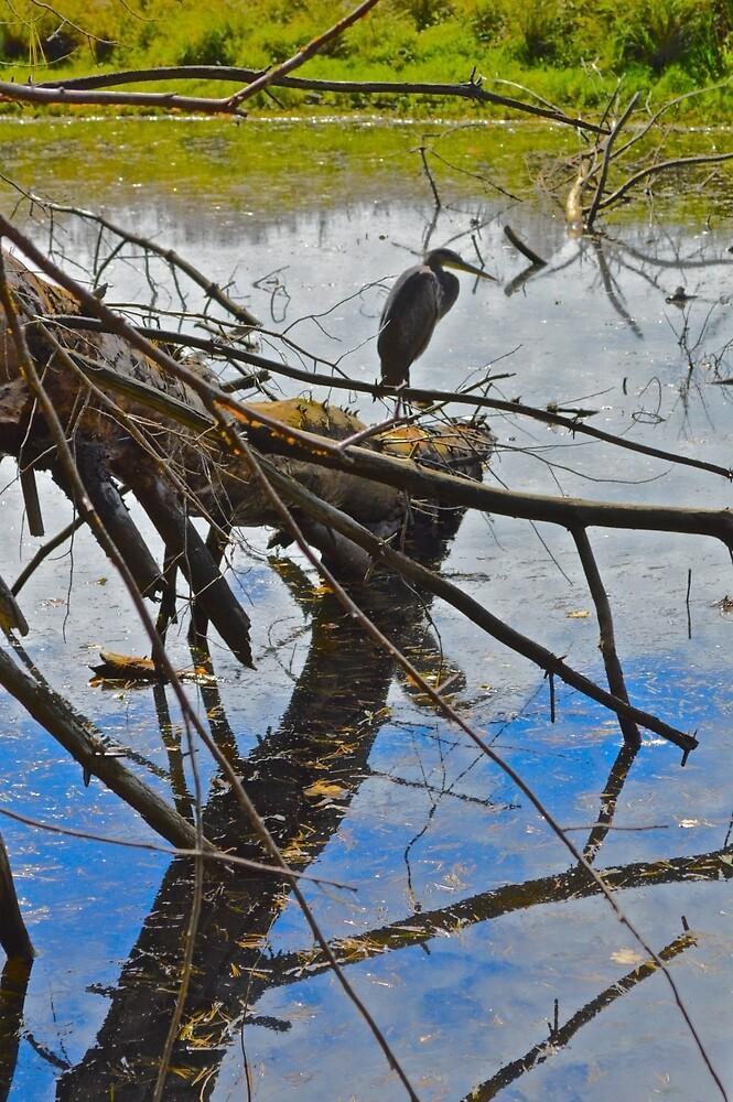 CANOE MEADOWS by John Houseman