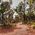 Exploring The Australian Bush by Eve Parry