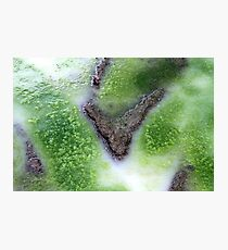 Green survival Photographic Print