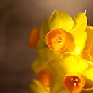 Sunny Days by Josie Eldred