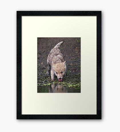 In the heat of the day Framed Print