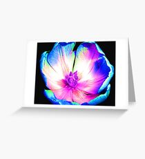 Multi-colour Pop Tulip #6 Greeting Card