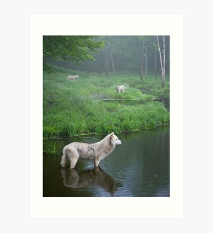 Three weary wolves Art Print