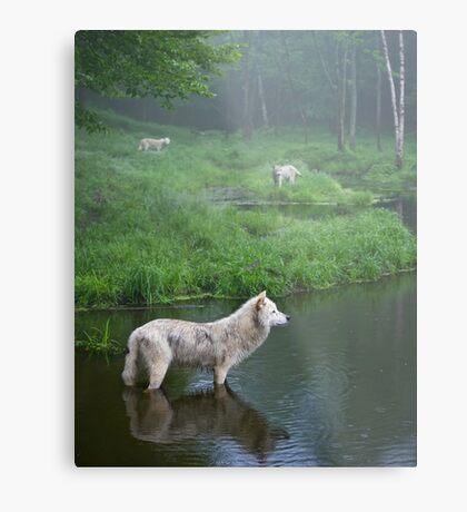 Three weary wolves Metal Print