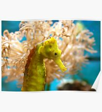 Yellow Seahorse Poster