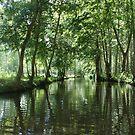 venice verte, France by graceloves