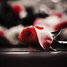 Romantic Pink Rose Flowers by Nhan Ngo