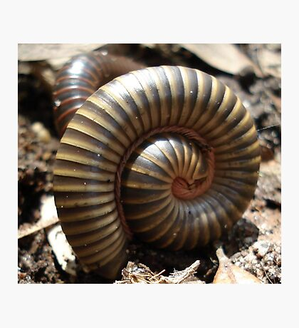 MILLIPEDES Photographic Print