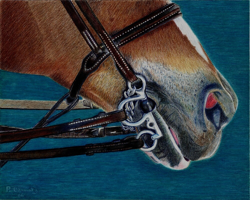 A Bit of Control - Study of the English Horse Bridle by Patricia Barmatz