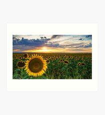 Sunflowers Of Golden Hour Art Print