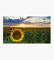 Sunflowers Of Golden Hour Photographic Print