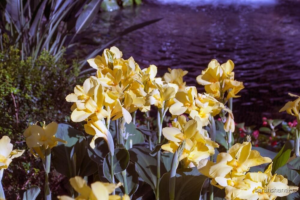Longwood Gardens - Spring Series 3 by sarahshanely
