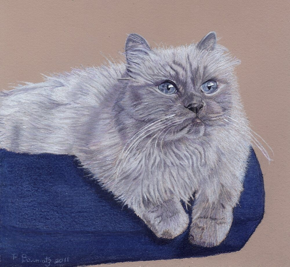 Bayou - A Portrait of a Himalayan Cat by Patricia Barmatz