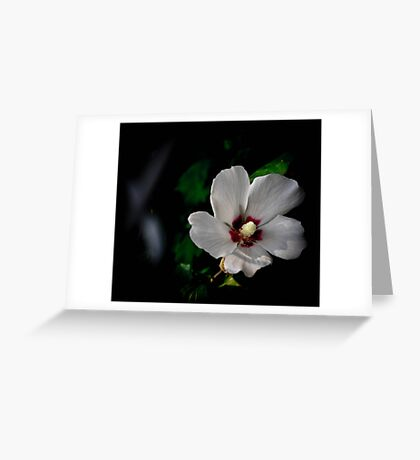 In the Dark.... Greeting Card