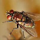 Shiny Fly by vasu