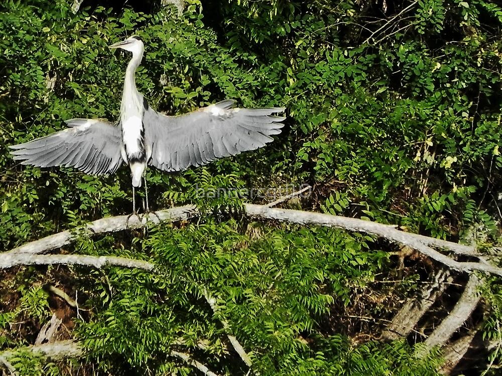 Heron the Flasher by bannercgtl10