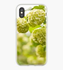 Viburnum opulus Roseum flowers iPhone Case