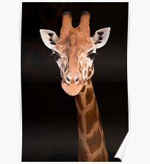 Taronga Giraffe Poster