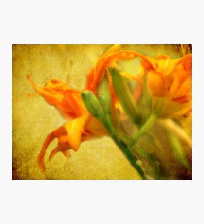 Lilies so Lovely Fotodruck