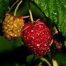 JUICY FRUIT by RoseMarie747