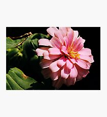 Ribbon Flower Photographic Print