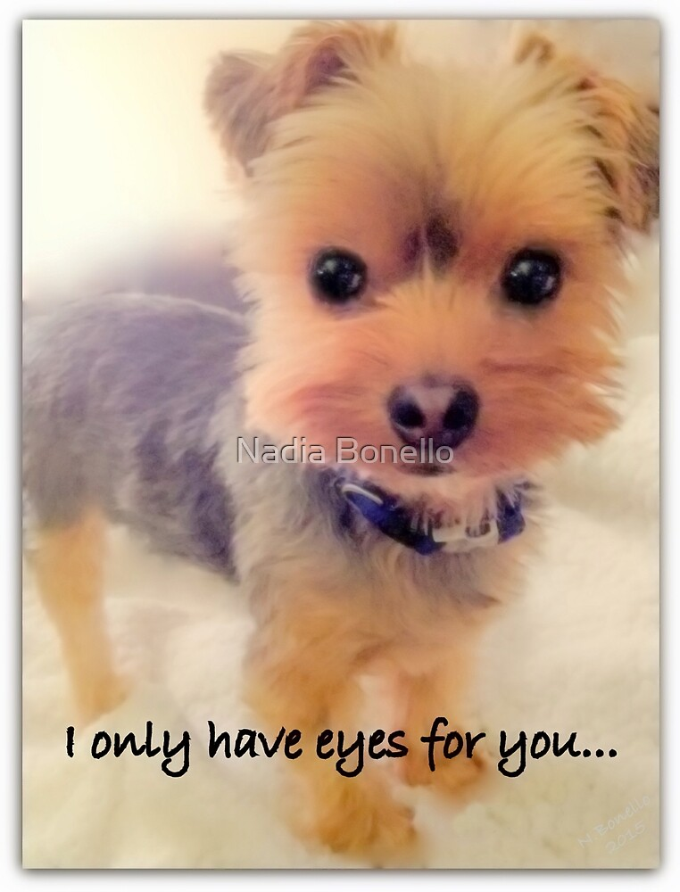 Dog | Dogs | I Only Have Eyes for You... | Puppy | Yorkie by Nadia Bonello