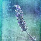 Of Love and Lavender  by Christine Annas