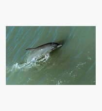 Bottlenose Dolphine Photographic Print