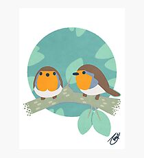 European Robins Photographic Print