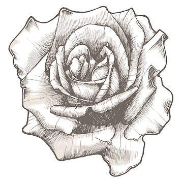 Hand Drawn Rose by gopinat