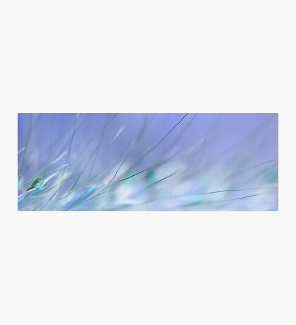 Blue Grasses Photographic Print