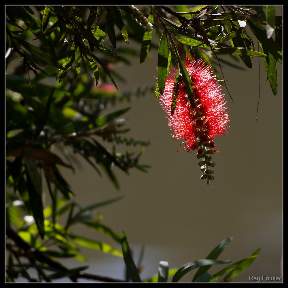 Bottle Brush by Ray Fowler