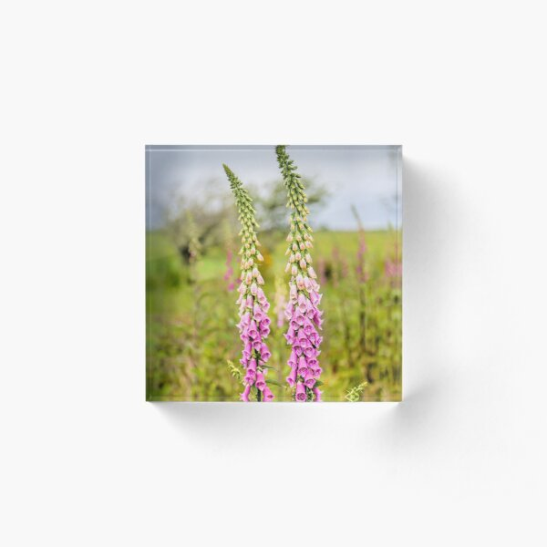 Young Foxglove Flowers Acrylic Block