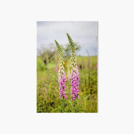 Young Foxglove Flowers Art Board Print