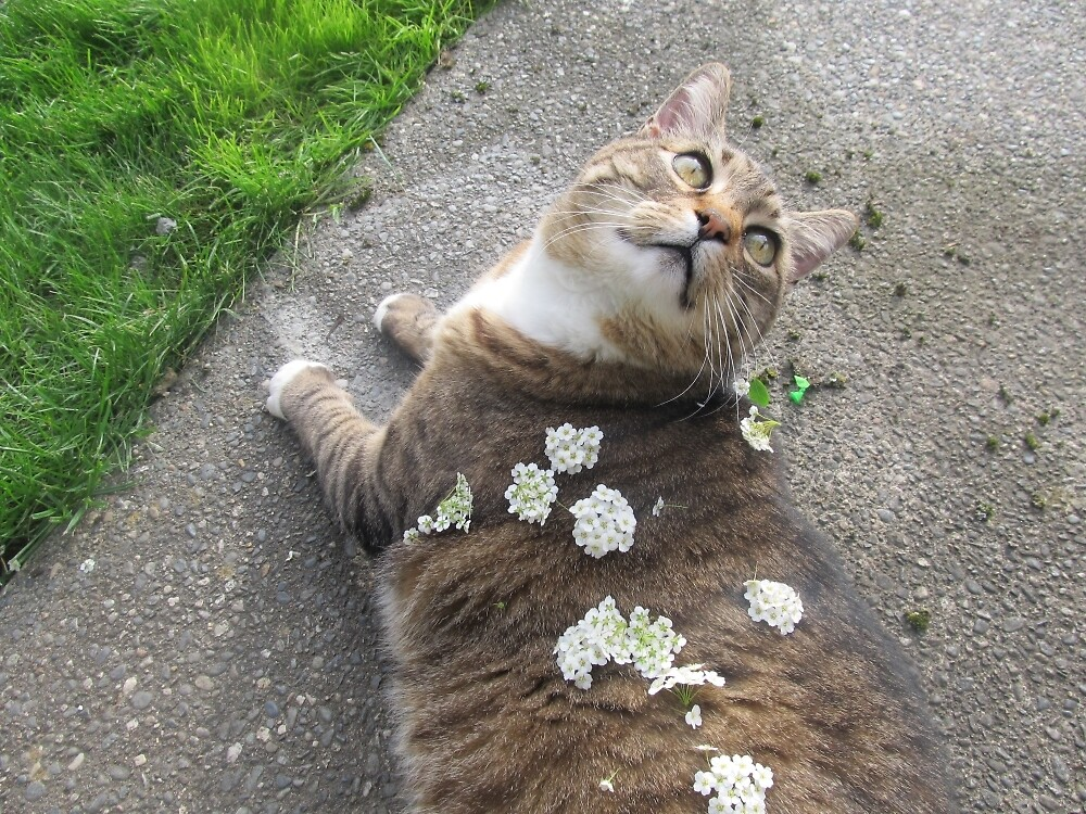 cat with flowers by rivervwolf