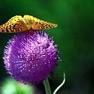 Butter Thistle by ArkansasLisa