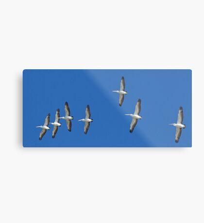 (not quite) Sequential Pelicans Metal Print