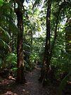 Rainforest Track by W E NIXON  PHOTOGRAPHY