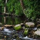 River Tolka, National Botanic Gardens, Dublin by Martina Fagan