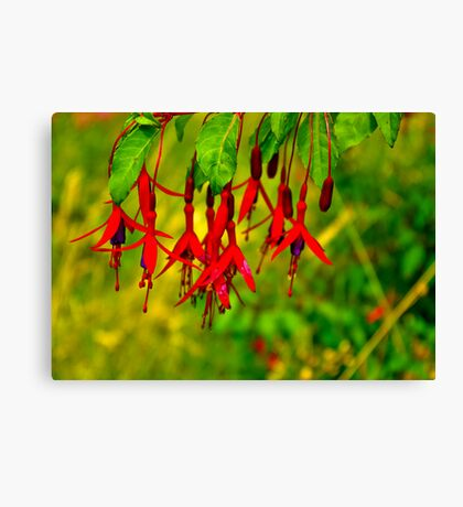Fuchsia   #2 Canvas Print