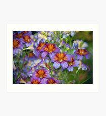Longwood Gardens - Spring Series 48 Art Print