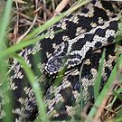 Adder by yampy