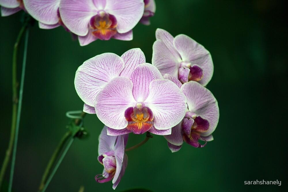 Longwood Gardens - Spring Series 56 by sarahshanely