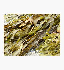 Seaweed.......pure and simple. Photographic Print